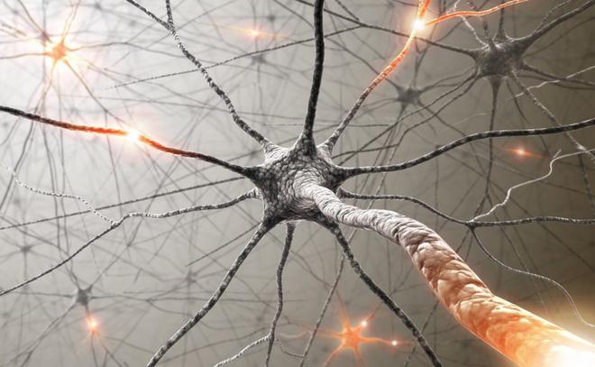 Các nhà khoa học ghi lại được khoảnh khắc não bộ dọn dẹp các tế bào thần kinh bị chết - Ảnh 1.