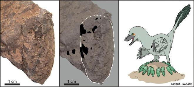 1.300 quả trứng sinh vật lạ 110 triệu tuổi xuất hiện ở Nhật Bản - Ảnh 1.