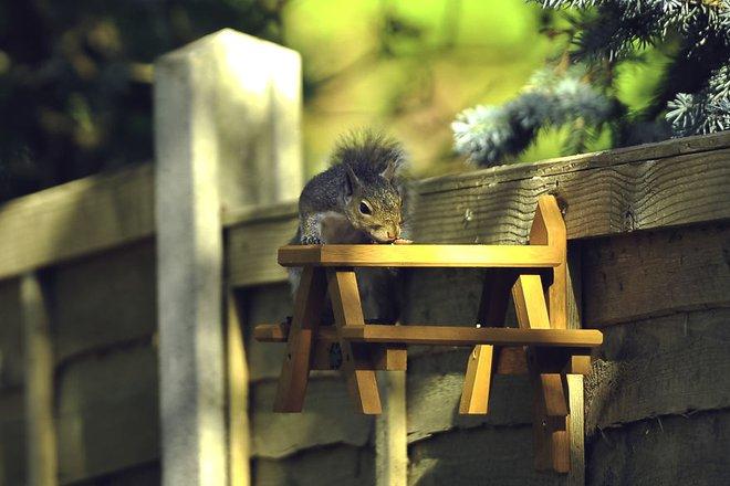 Chú sóc lầy lội: Đi xin ăn, thấy ngon liền gọi hội, ăn xong lại có hành động tuyệt vời - Ảnh 5.