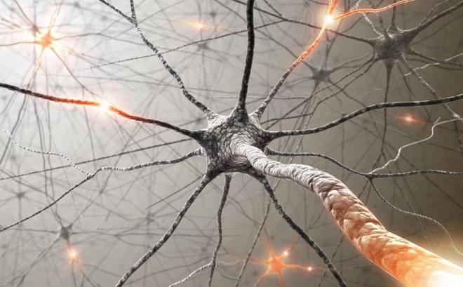 Các nhà khoa học ghi lại được khoảnh khắc não bộ 'dọn dẹp' các tế bào thần kinh bị chết
