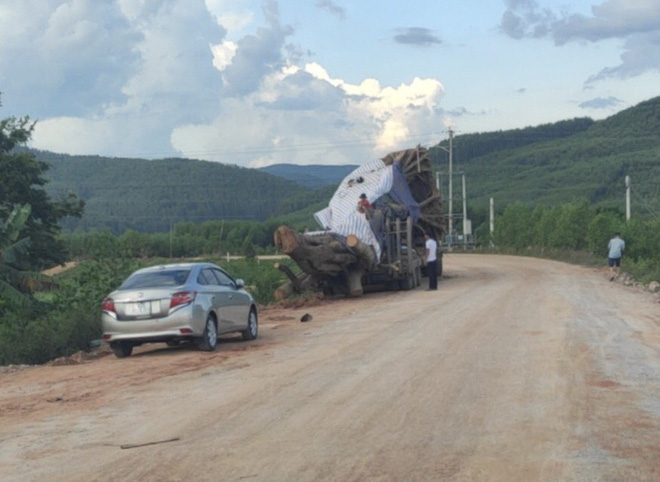 Xôn xao hình ảnh xe chở cây quái thú băng băng chạy trên đường ở Nghệ An - Ảnh 4.