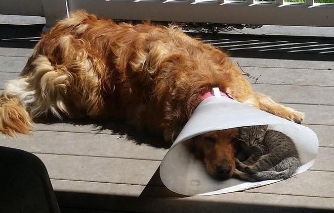 Khoảnh khắc tương trợ ấm áp của động vật khiến trái tim bạn tan chảy - Ảnh 1.