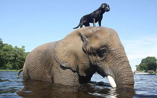 Khoảnh khắc tương trợ ấm áp của động vật khiến trái tim bạn tan chảy - Ảnh 13.