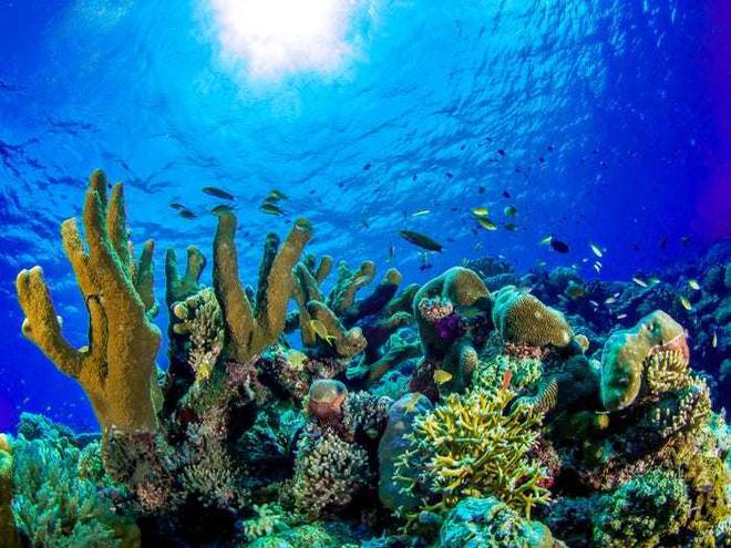 Điều đặc biệt gì khiến hòn đảo này được bình chọn đẹp nhất thế giới? - Ảnh 7.
