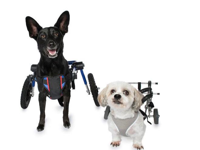 11 chú chó khuyết tật sẵn sàng truyền cảm hứng sống cho bạn - Ảnh 1.