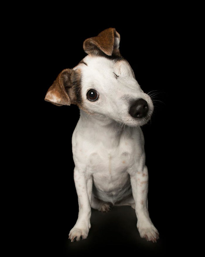 11 chú chó khuyết tật sẵn sàng truyền cảm hứng sống cho bạn - Ảnh 2.