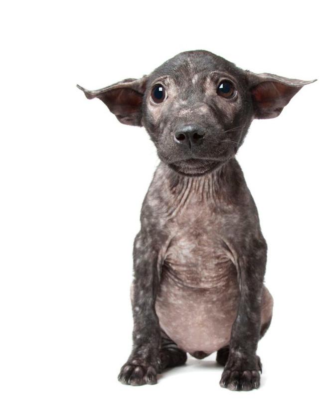 11 chú chó khuyết tật sẵn sàng truyền cảm hứng sống cho bạn - Ảnh 3.