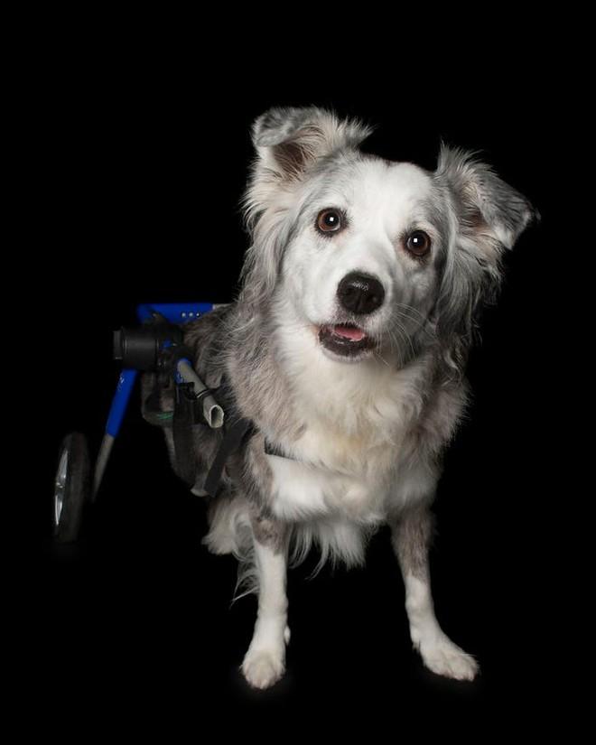 11 chú chó khuyết tật sẵn sàng truyền cảm hứng sống cho bạn - Ảnh 4.