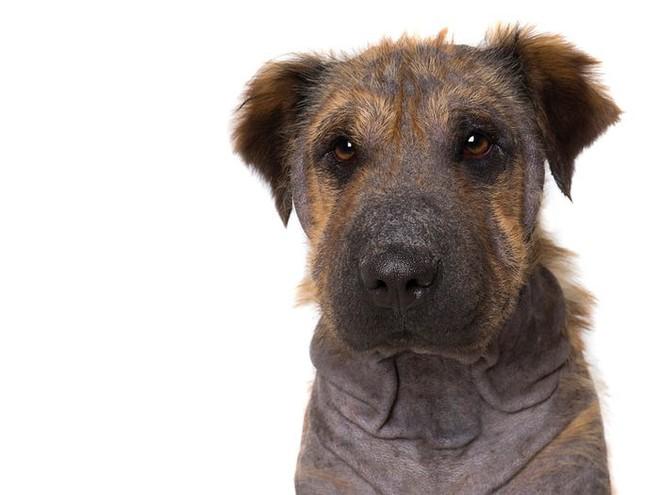 11 chú chó khuyết tật sẵn sàng truyền cảm hứng sống cho bạn - Ảnh 5.