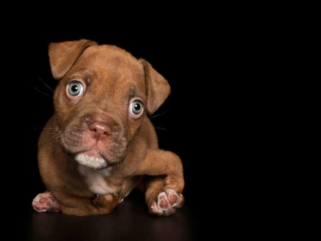 11 chú chó khuyết tật sẵn sàng truyền cảm hứng sống cho bạn - Ảnh 7.