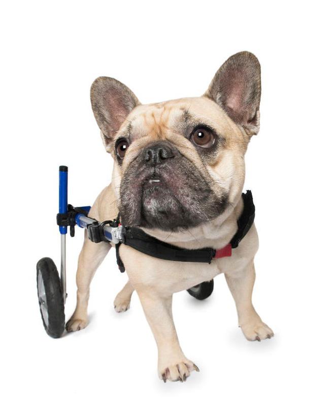 11 chú chó khuyết tật sẵn sàng truyền cảm hứng sống cho bạn - Ảnh 8.