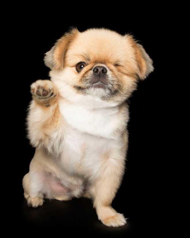 11 chú chó khuyết tật sẵn sàng truyền cảm hứng sống cho bạn - Ảnh 9.