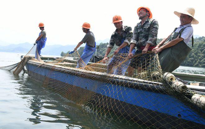 Trung Quốc: Đập thủy điện xả lũ, bội thu 25.000kg cá mè hoa - Ảnh 3.
