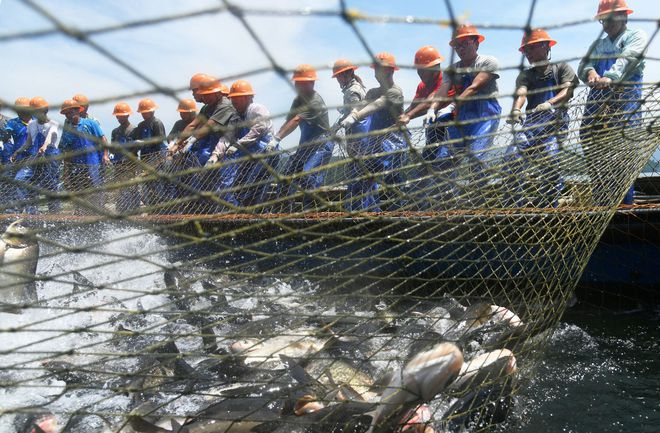 Trung Quốc: Đập thủy điện xả lũ, bội thu 25.000kg cá mè hoa - Ảnh 5.