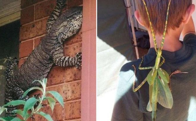 18 bức ảnh chứng minh thiên nhiên nước Úc là cả một thế giới đáng sợ đến rợn người