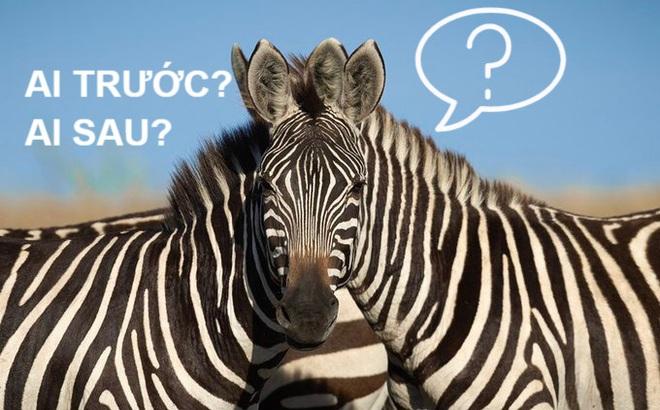 Dập tắt tranh luận về câu đố đang cực hot trên Twitter: Bạn chọn ngựa trái hay phải?