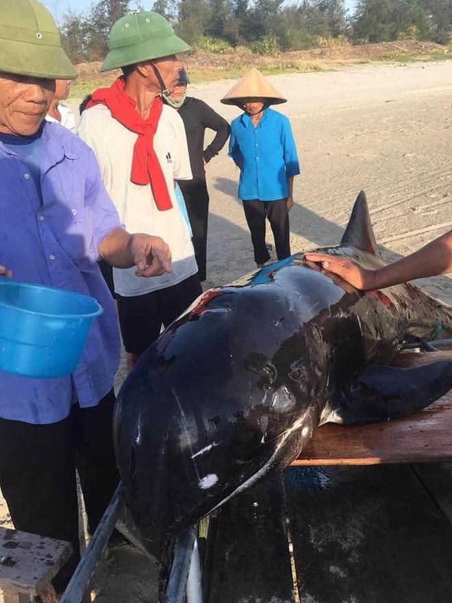 Hơn 2 giờ đồng hồ hồi sức và giải cứu cá voi nặng 2 tạ mắc lưỡi câu dạt vào bờ - Ảnh 1.