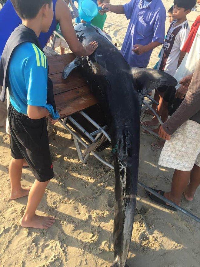 Hơn 2 giờ đồng hồ hồi sức và giải cứu cá voi nặng 2 tạ mắc lưỡi câu dạt vào bờ - Ảnh 2.