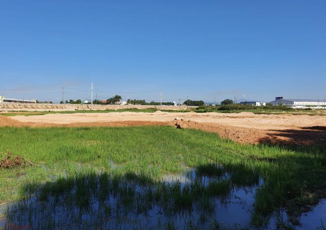Đất Xanh Quảng Ngãi ngang nhiên dùng máy xúc lấp đất ruộng khi chưa được giao đất - Ảnh 2.
