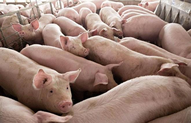 Bộ Nông nghiệp chỉ tên nhiều doanh nghiệp không phối hợp giảm giá thịt lợn - Ảnh 1.