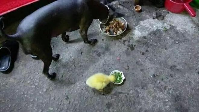Mua trứng vịt lộn về quên không luộc, khi nhớ ra thì chàng trai đã có thêm cục nợ to đùng - Ảnh 3.