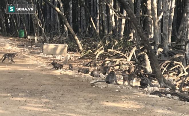 Du ngoạn hòn đảo 2.000 con khỉ ở Cần Giờ chỉ chưa tới 100.000 đồng - Ảnh 4.
