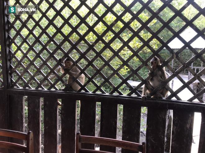 Du ngoạn hòn đảo 2.000 con khỉ ở Cần Giờ chỉ chưa tới 100.000 đồng - Ảnh 6.