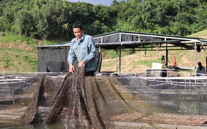 """Nuôi cá """"tàu ngầm"""" trên lòng hồ sông Đà, hút du khách, cá bán """"cháy hàng"""""""