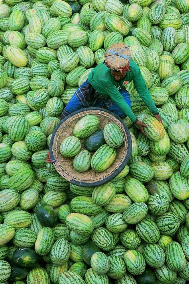 20 bức ảnh tuyệt đẹp về màu xanh lá cây giúp bạn thư giãn ngay lập tức - Ảnh 14.
