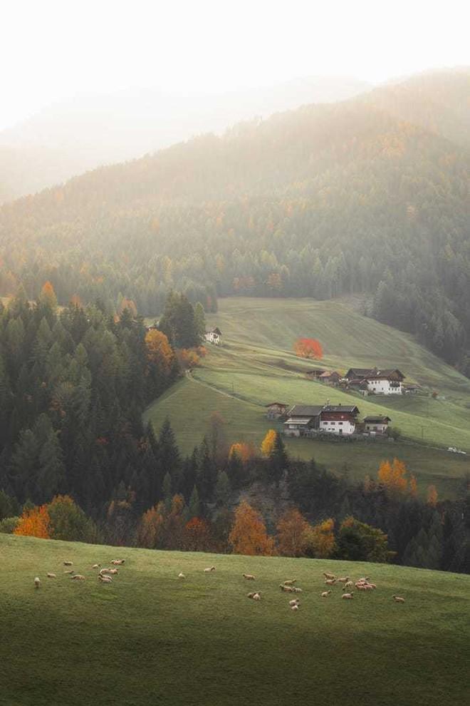 20 bức ảnh tuyệt đẹp về màu xanh lá cây giúp bạn thư giãn ngay lập tức - Ảnh 4.