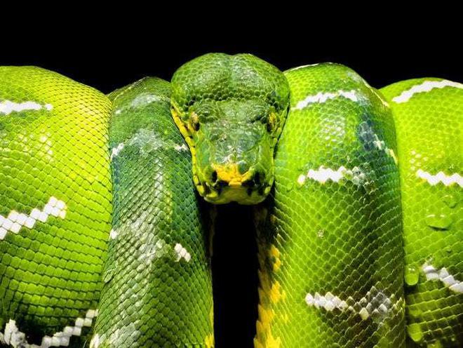 20 bức ảnh tuyệt đẹp về màu xanh lá cây giúp bạn thư giãn ngay lập tức - Ảnh 6.