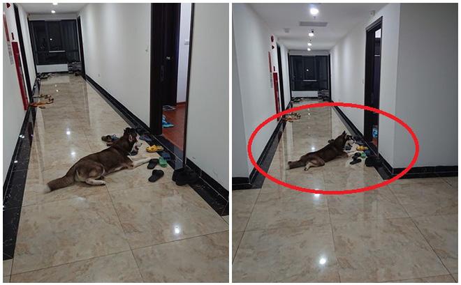 """Bình thường toàn ngó lơ hàng xóm, khi thấy bánh gato lại cố làm thân: Chú chó khiến chủ phải đi nhặt """"liêm sỉ"""" giúp!"""