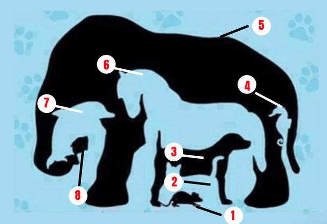 Phải rất tinh mắt mới nhìn đủ 8 con vật trong bức tranh ảo giác - Ảnh 1.