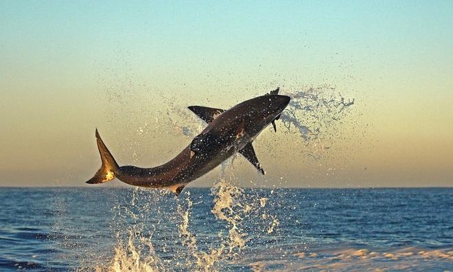 Điểm mặt 13 hung thần đại dương khét tiếng nhất thế giới - Ảnh 2.