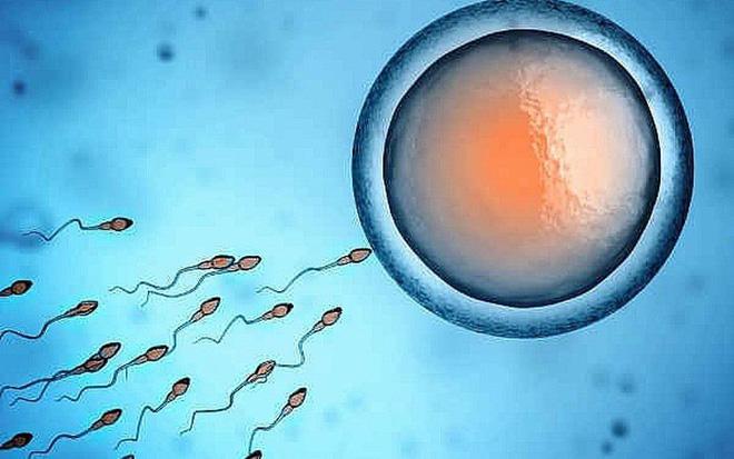 10 giải pháp cải thiện nhanh và hiệu quả chất lượng tinh trùng: Nền tảng duy trì phong độ - Ảnh 2.