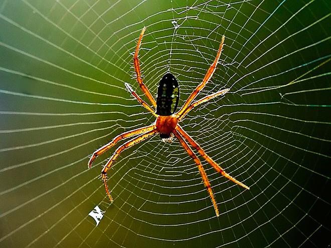 Định giẫm chết con nhện nhưng lại thôi, người đàn ông thoát khỏi khổ nạn và hồi kết đáng ngẫm - Ảnh 1.