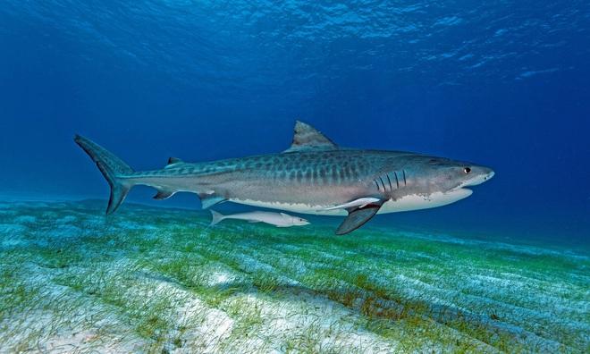 Điểm mặt 13 hung thần đại dương khét tiếng nhất thế giới - Ảnh 13.