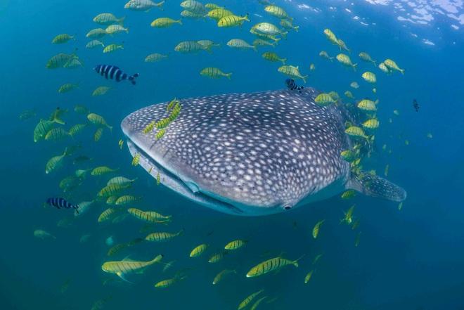 Điểm mặt 13 hung thần đại dương khét tiếng nhất thế giới - Ảnh 4.