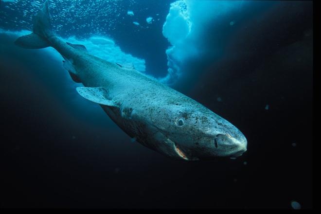 Điểm mặt 13 hung thần đại dương khét tiếng nhất thế giới - Ảnh 7.