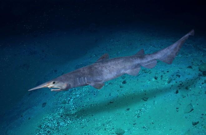 Điểm mặt 13 hung thần đại dương khét tiếng nhất thế giới - Ảnh 9.