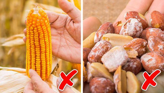Điều gì sẽ xảy ra nếu chúng ta ăn nhầm phải đồ ăn bị mốc? - Ảnh 1.