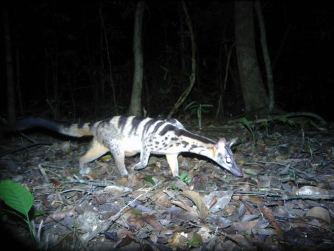 Phát hiện nhiều loài động vật cực kỳ quý hiếm ở Kon Tum - Ảnh 2.