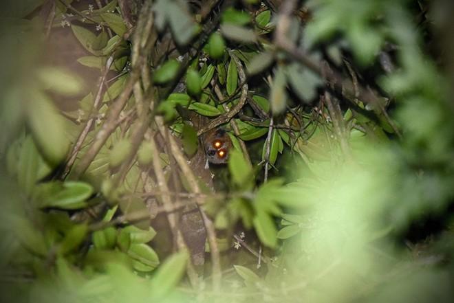 Phát hiện nhiều loài động vật cực kỳ quý hiếm ở Kon Tum - Ảnh 3.