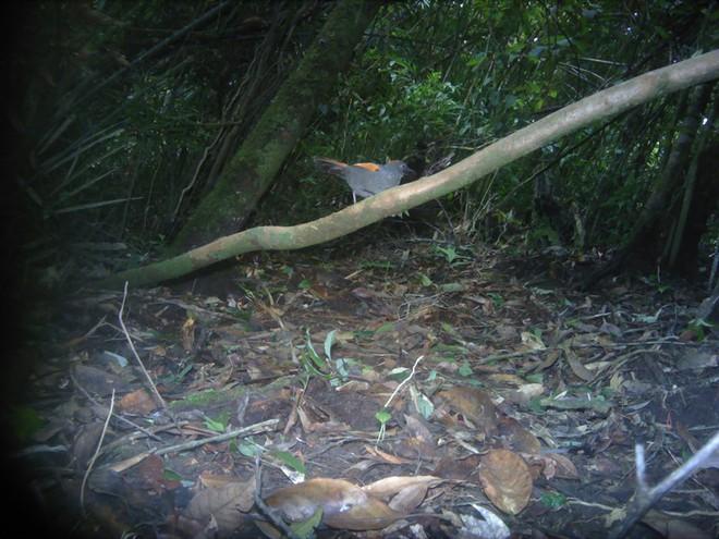 Phát hiện nhiều loài động vật cực kỳ quý hiếm ở Kon Tum - Ảnh 5.