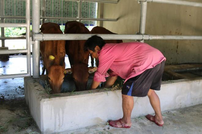 Cận cảnh chuồng bò hạng sang, có loại giá hơn 230 triệu đồng ở Nghệ An - Ảnh 5.