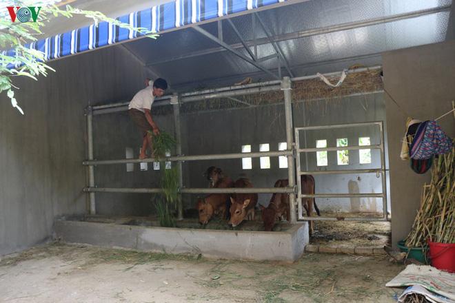 Cận cảnh chuồng bò hạng sang, có loại giá hơn 230 triệu đồng ở Nghệ An - Ảnh 10.