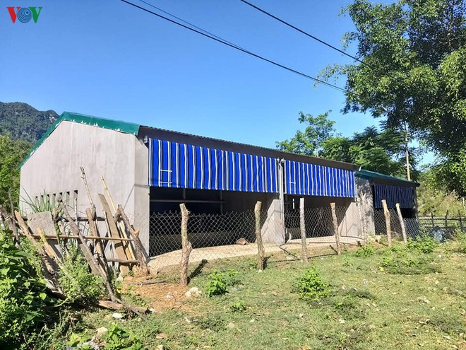 Cận cảnh chuồng bò hạng sang, có loại giá hơn 230 triệu đồng ở Nghệ An - Ảnh 14.
