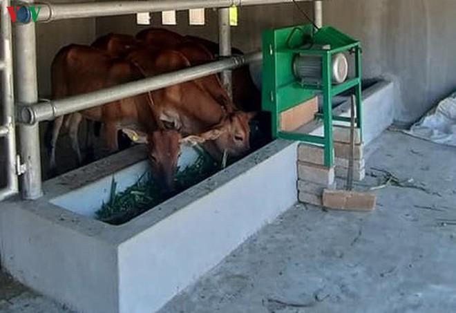 Cận cảnh chuồng bò hạng sang, có loại giá hơn 230 triệu đồng ở Nghệ An - Ảnh 11.