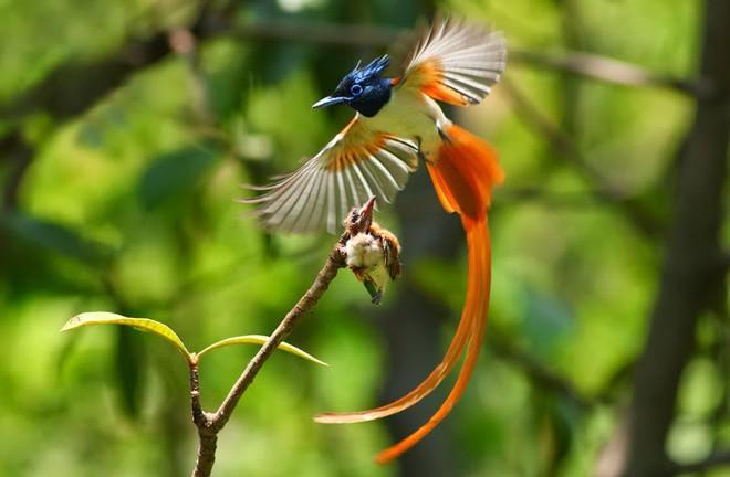 Clip: Cận cảnh loài chim có vẻ đẹp quyến rũ nhất hành tinh - Ảnh 2.