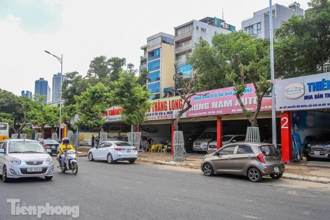 Nhiều cây sưa tiền tỷ trên đường phố Hà Nội dần chết khô trong bọc sắt - Ảnh 12.